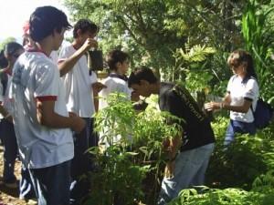 Cartilha para jovens sobre a preservação do meio ambiente
