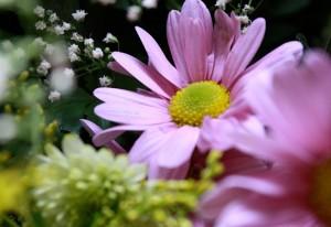 Curso gratuito de montagens de arrajos florais em Curitiba