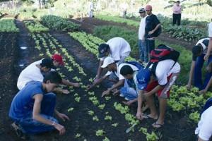 Projeto Transformar prevê mais qualificação profissional para jovens rurais em 2011